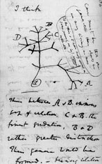 Darwin's Tree of Life - July 1837.