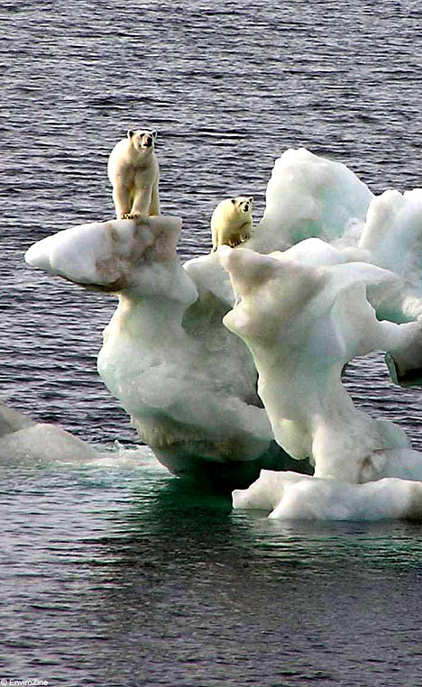 Polar Bear Stranded on an Iceberg.